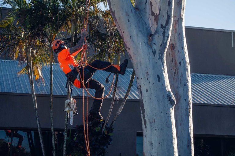 palm tree removal Ipswich